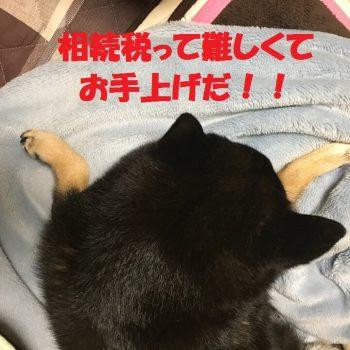 相続税_ぷりんさん